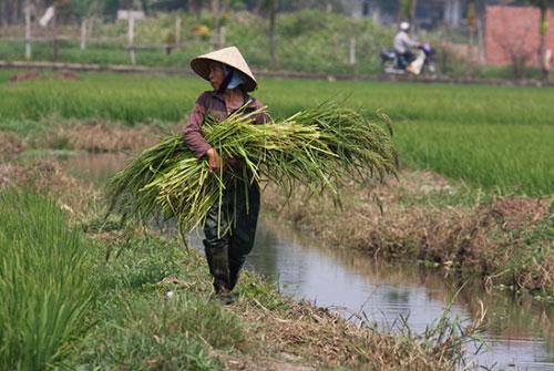 Vietnam-vakantie